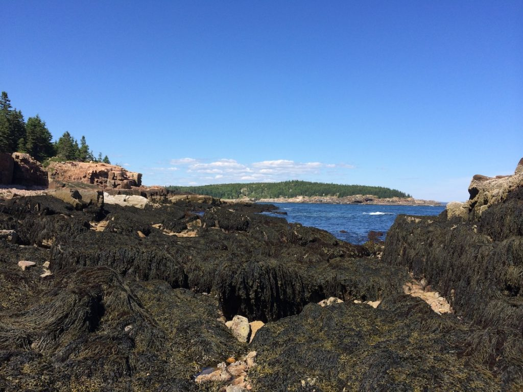 How to see Acadia in One Day.