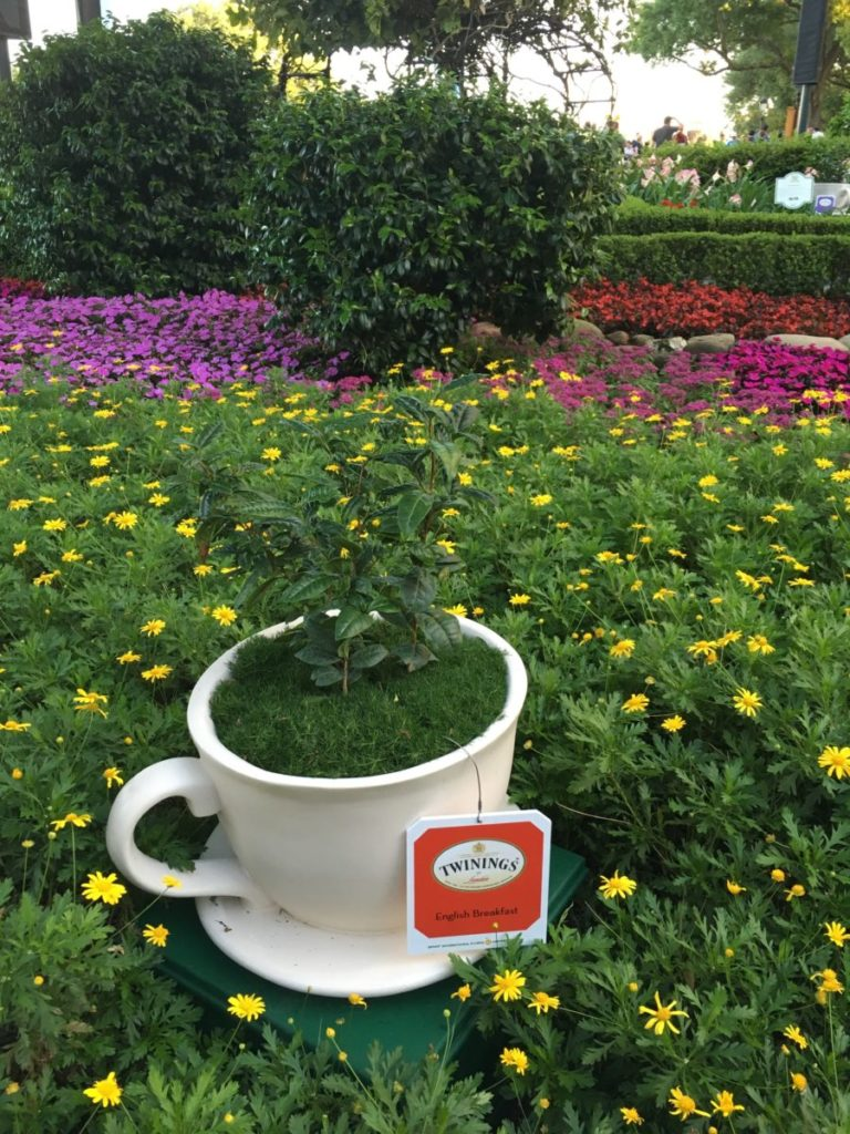 In Epcot's United Kingdom, I'm enchanted with the teacup gardens in all my favorite varieties. International Flower and Garden Festival