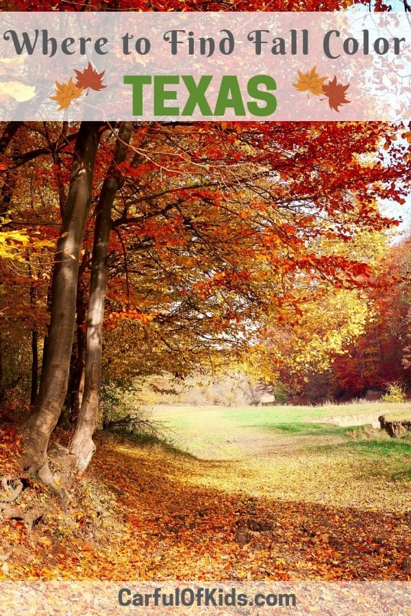 Fall is not lost in Texas. Head to a couple of state parks west of San Antonio for all the yellows, oranges and reds. As a bonus both parks offers camping. Read on for where to find fall color in Texas. #Texas #fall #travel