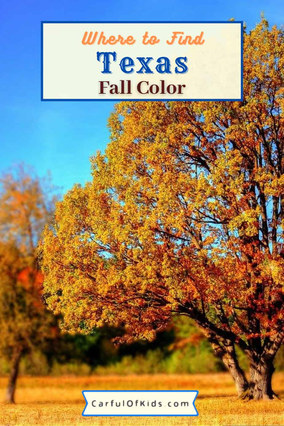 Fall is not lost in Texas. Find maples, sweetgums and cypress in parks across Texas. See the yellows, oranges and reds in late October and early November. As a bonus the parks offers camping. Get the details to help plan your Fall Color Trip in Texas. #Texas #fallcolor Best parks in Texas for fall color | When do the trees change in Texas