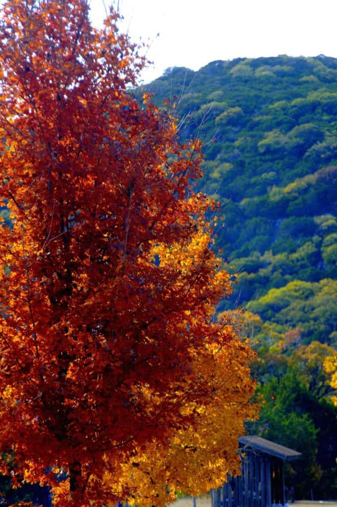 Best places for fall color in Texas, Lost Maples State Natural Area, best park for fall color in Hill country,