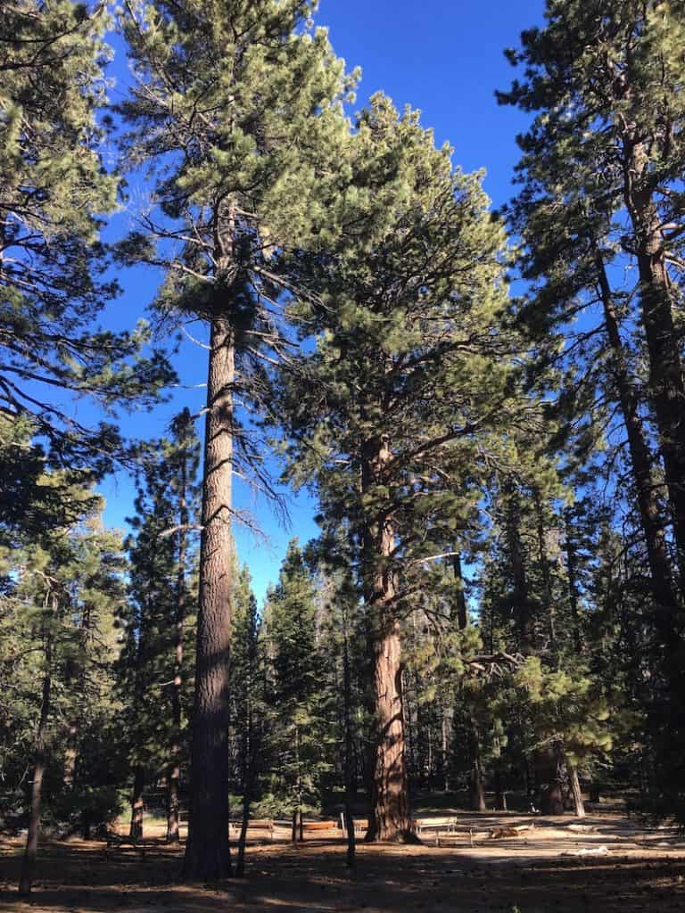 Take the Palm Spring Aerial Tram for summer shade and a hike in the evergreens.