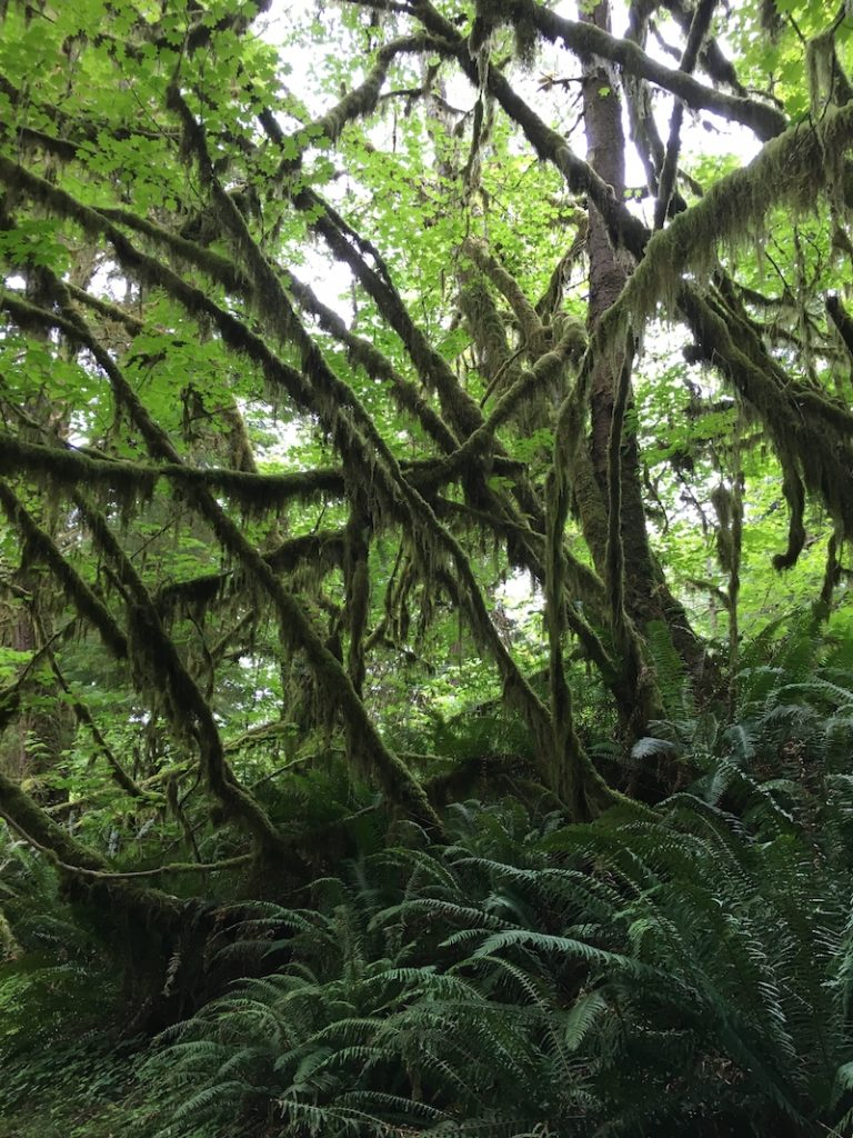 Discover the Olympic National Park rainforests with kids.