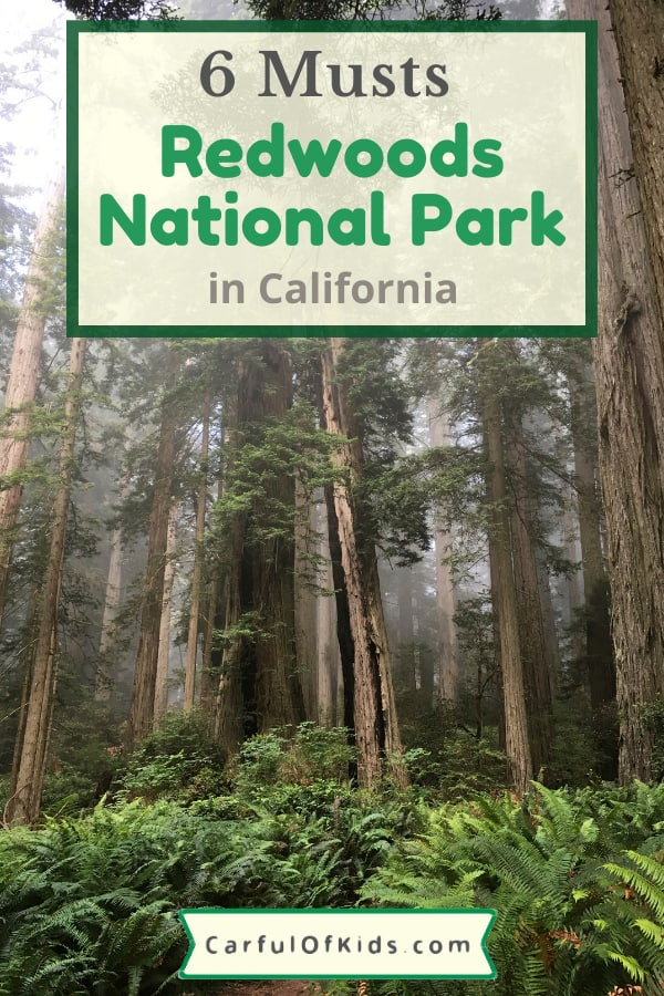 Head to the mysterious land where Ewoks once played in Northern California--Redwoods National Park. See the towering trees, spot a Roosevelt Elk or hop on a bike to explore. Find lots of trails, cabins in the park along with a beach in a favorite national park dedicated to some of largest trees in the world. #NPS #NationalPark #Redwoods #California Where to see Redwoods in California | What to do in the Redwoods National Park | Where to Stay in the Redwoods National Park