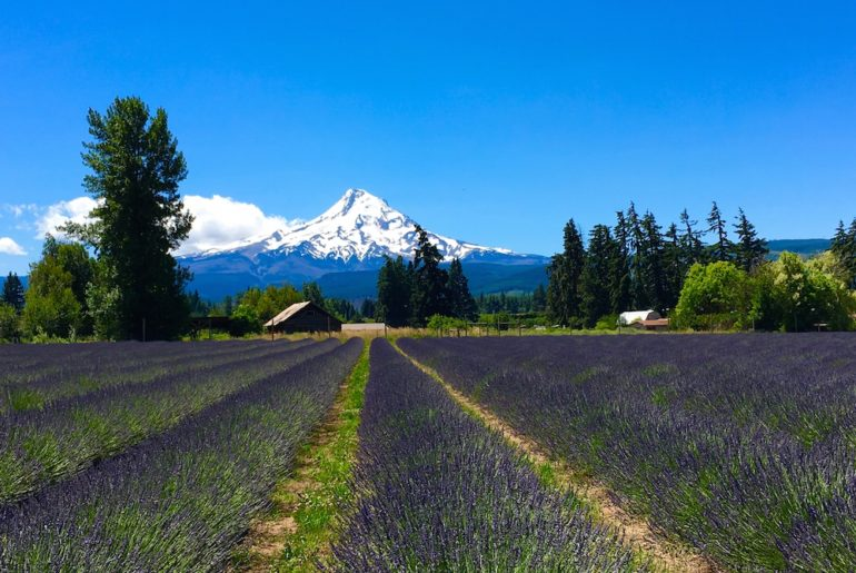 Mount Hood. Oregon Road Trip Itinerary