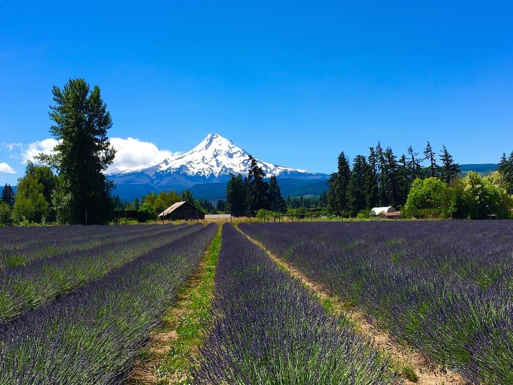 Mount Hood. Oregon Road Trip Itinerary