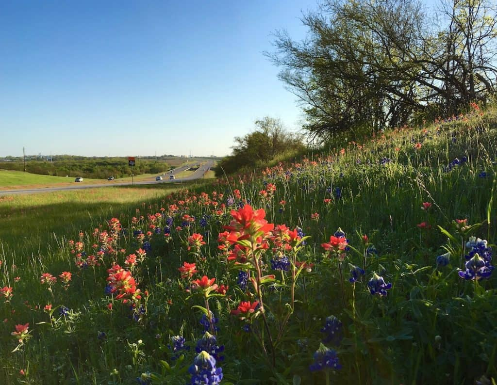 Texas Wildflowers. perfect spring getaway to Garner State Park