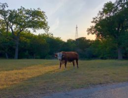 Things to do in Fredericksburg Texas