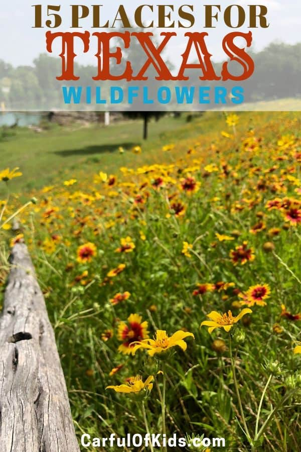 Take a drive down a backroad to find a hillside covered in wildflowers. Or spend the day in a park exploring a wildflower meadow. Here's 15 places to explore to find Texas Wildflowers. #Texas #Wildflowers Where to find the best wildflowers in Texas